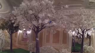 """Шикарные белые сакуры и фикусы для свадьбы в банкетном зале """"Парадайз"""""""