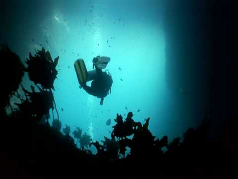 Poor Knights Islands Diving - World Class