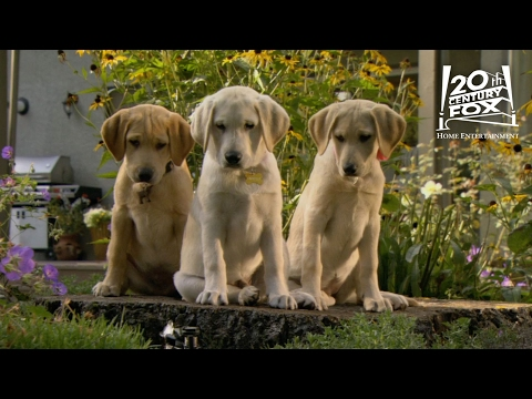 "Marley And Me The Puppy Years | ""The Sprinkler"" Clip [HD] 