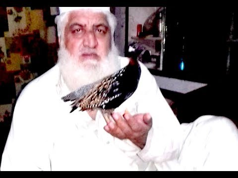 Video Teetar bird Sindhi kala teetar ki awaz download in MP3, 3GP, MP4, WEBM, AVI, FLV January 2017