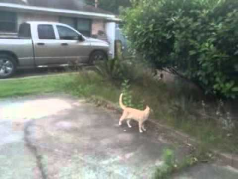 Bird Bullies Cat