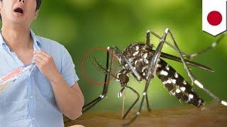 蚊のにおいセンサー利用した災害捜索ロボ開発へ