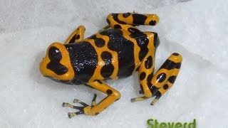 Poison Dart Frog Room 10-2012