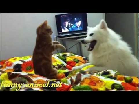 dog-plays-and-fights-with-cat