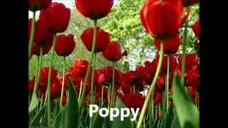 Names Of  Different Flowers.wmv