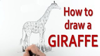 Check out all my videos at:http://www.art-tutorialsonline.comyoutube.com/paulpriestleyartIn this art tutorial I explain, in a simple step by step manner how to draw a giraffe starting from basic shapes. I explain how to create oval shapes to represent the body and top part of the animal's legs. I show how to work out the length of the legs and neck and how to sketch this is some detail.I also show how to create the pattern of the giraffe's body so that it looks convincing. The art tutorial is aimed at beginners and children and anyone wanting to learn to draw animals.