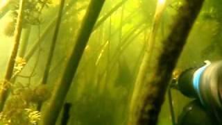 подводная охота карась щука.avi