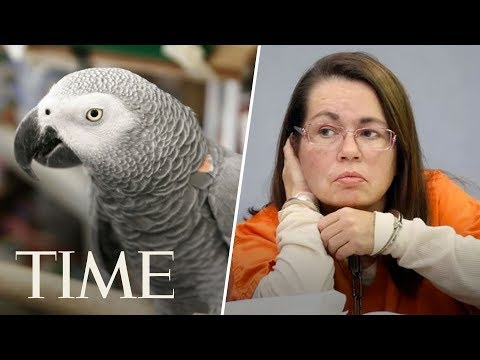 Woman Is Convicted Of Murder After Parrot Who Witnessed Killing Repeats 'Don't Shoot' | TIME