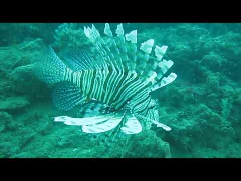 Sooooo many fish! and lionfish! Scuba diving Negombo sri lanka