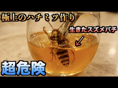 【超危険】蜂蜜の中に生きたスズメバチ入れて極上の蜂蜜を作る!!