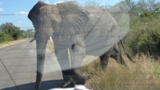 Elephant Attack: Five Tonne Elephant Smashes Into Car Full Of Tourists