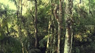 Medir los bosques tropicales de Panamá