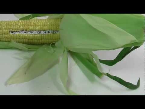 Organic Gardening – Fun Corn Promo