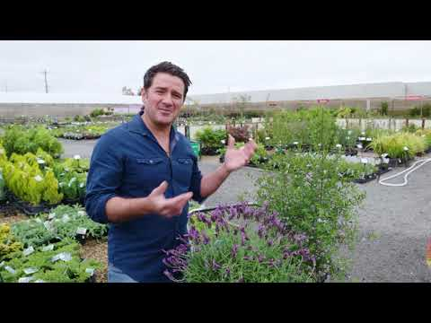 Pope – Efficient Watering | The Home Team S4 E4