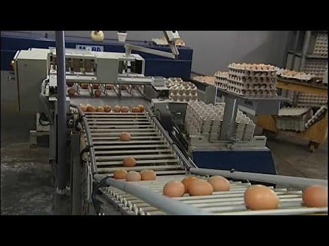 Διαστάσεις προσλαμβάνει το διατροφικό σκάνδαλο με τα μολυσμένα αυγά