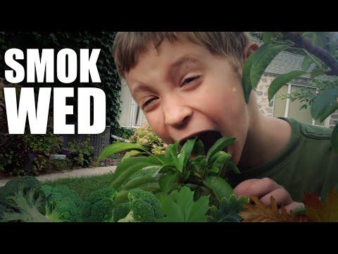 SMOK WED 420