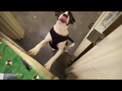 Video: Carter County Animal Shelter