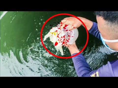 Jellyfish challenge in real life