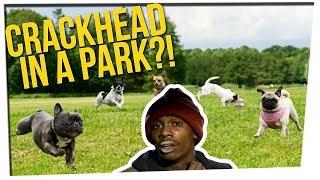 Video Off The Record: Joe's Dog Park Story & a Beaws Argument  ft. DavidSoComedy MP3, 3GP, MP4, WEBM, AVI, FLV Oktober 2018