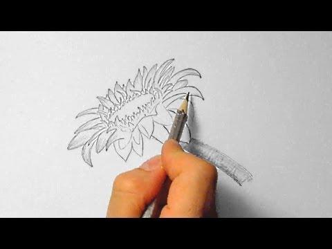 Sonnenblume, zeichnen im Zeitraffer (Sunflower, drawing in fast motion)