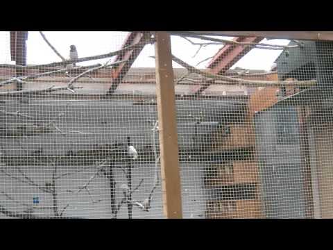 Finch Aviary & Birdroom