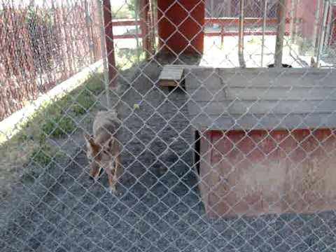 Kaiu in Suisun Wildlife Center