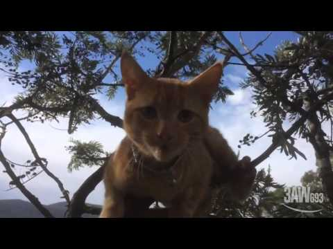 Kitten Rescued from Tree by Crowdfunding