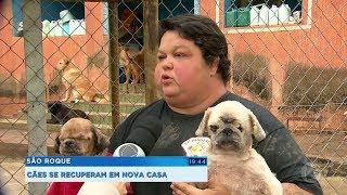 ONG de São Roque pede ajuda para cuidar de animais resgatados de canil clandestino