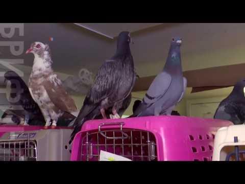 Птичий госпиталь спасает животных от Нью-Йорка