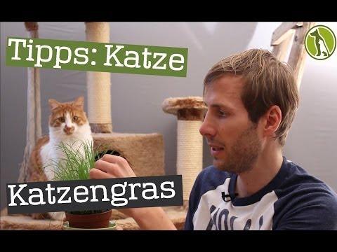Katzenhalter Tipp: Katzengras