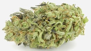 Durban Poison - (Strain Review) by Strain Central