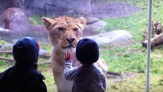 Video 10 MOST STUNNING MOMENTS AT THE ZOO MP3, 3GP, MP4, WEBM, AVI, FLV September 2018