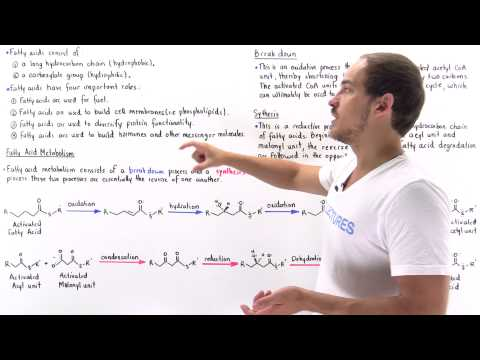 Introduction to Fatty Acid Metabolism