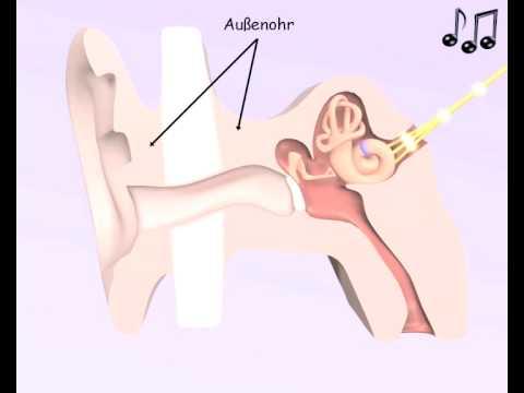 hören - Diese Animation über unser Ohr ist Teil der Sachunterrichtssoftware LernMax. Weitere Informationen unter http://www.lernmax.at.
