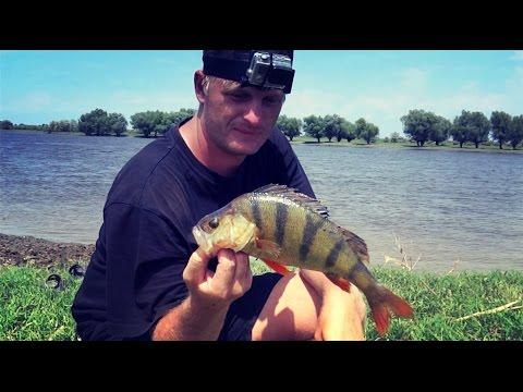 Смотреть онлайн вся наша команда в предвкушении отличной рыбалки на змееголова