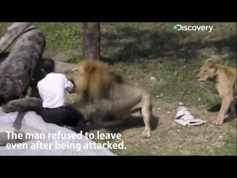 Lion attacks man