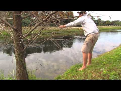Fly Fishing for Bass in a Retention Pond
