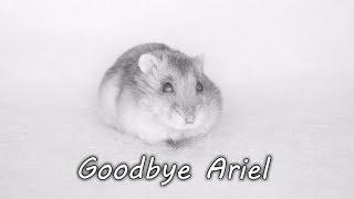 Nonton     Goodbye Ariel     Film Subtitle Indonesia Streaming Movie Download