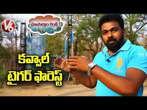 Kawal Tiger Forest   Choosodham Randi   V6 News