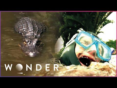 Man Survives Dangerous Alligator Attack | Human Prey S1 EP4 | Wonder