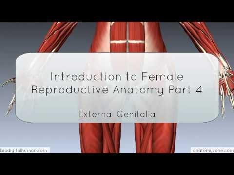female anatomy - http://www.anatomyzone.com 3D anatomy tutorial on the female external genitalia using the BioDigital Human (http://www.biodigitalhuman.com). Join the Faceboo...