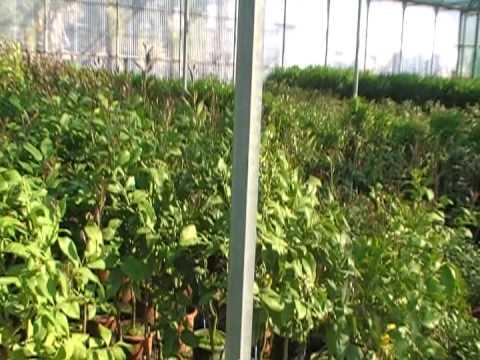 Viveros ornamentales videos videos relacionados con for Viveros ornamentales