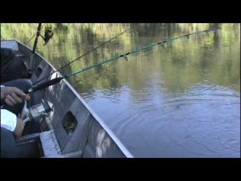 pescaria trairão 12 kg rio xingu/MT