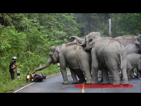 Four elephant charge