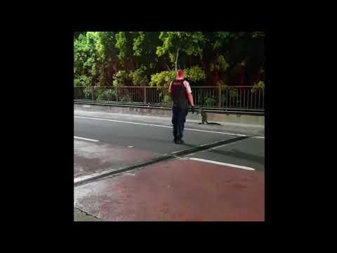 Καγκουρό έκανε βόλτα σε κεντρική λεωφόρο του Σίδνεϊ
