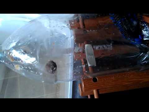 Comment construire un piege a renard la r ponse est sur - Comment deposer une main courante ...