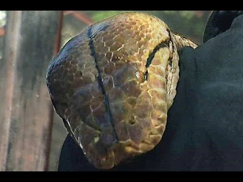 World's Longest Snake Guiness Book Record - Medusa