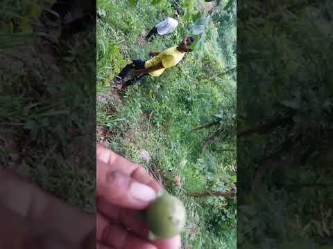 At the top of mountai (видео)