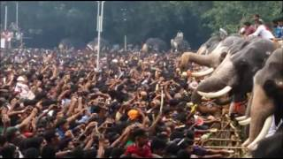 Thrissur India  City new picture : Aanayoottu - Feeding of Elephants - in Thrissur, Kerala, India - 2016