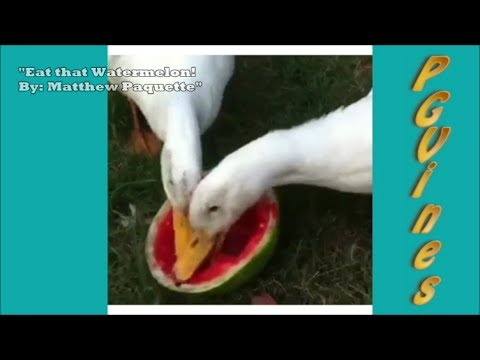 Hilarious *NEW* – Vine Compilation w/ Puppies!!!! November 2013 – PG Vines * Part 11 [HD]